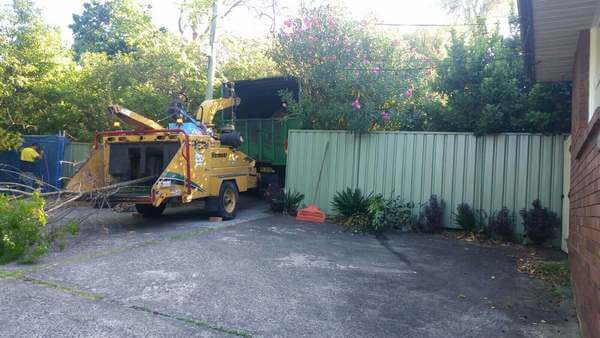 Affordable Tree Services Milsons Point